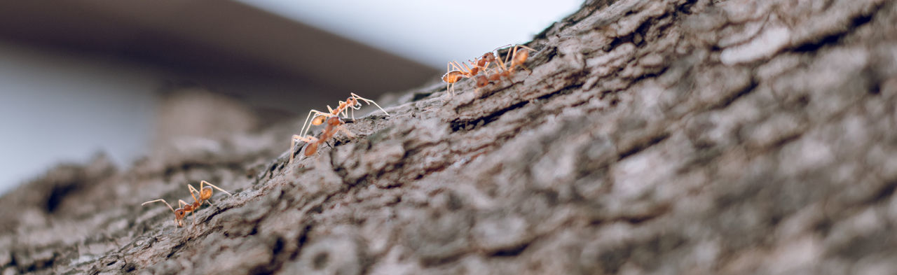 Close-Up Of Ants On Tree Trunk
