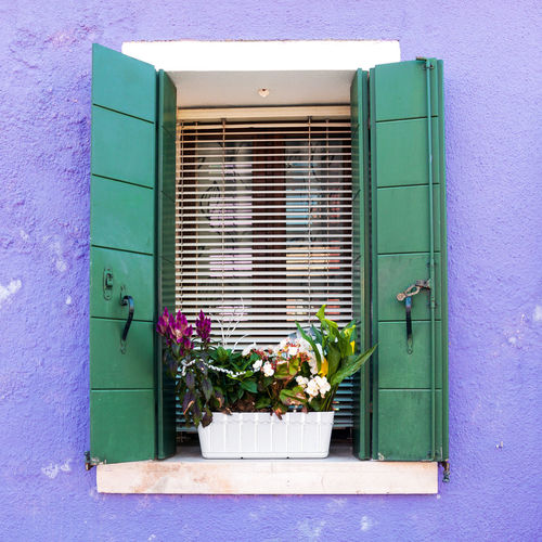Potted plant on window sill of house