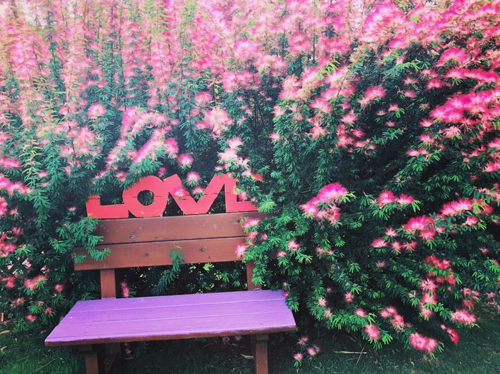 This is really full of LOVE Tree Growth Pink Color Nature Day Outdoors Beauty In Nature Flower Flowering Plant Art And Craft