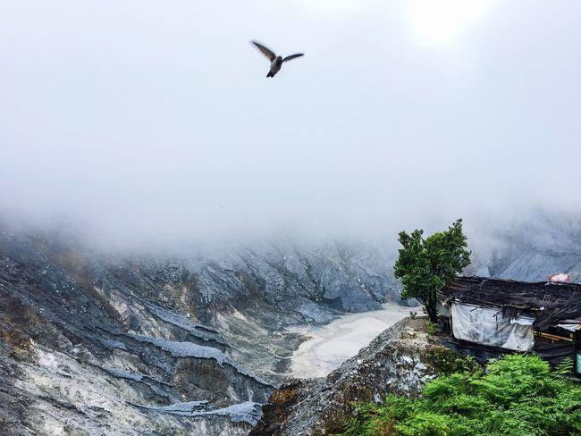 The Great Outdoors With Adobe Tangkuban Perahu Volcano in Bandung, Indonesia. As I click the shutter the bird flew by :) Nature's Diversities The Essence Of Summer- 2016 EyeEm Awards EyeEm X Adobe - The Great Outdoors
