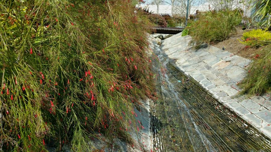 High angle view of gutter amidst plants
