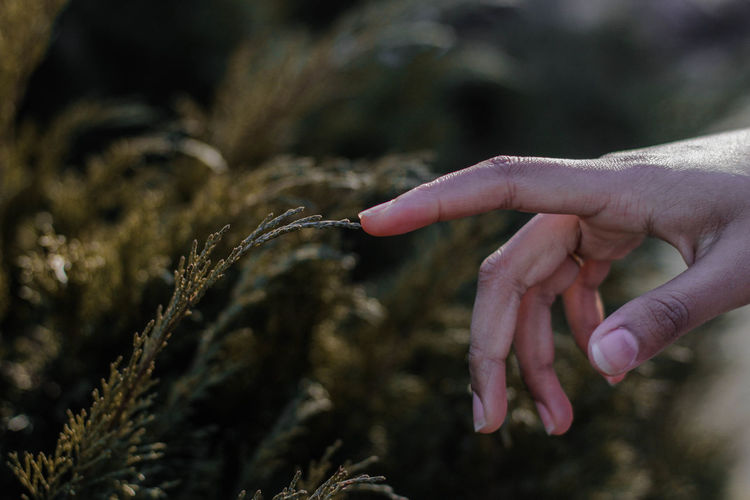 Touch the Leaves Human Hand Hand Human Body Part One Person Plant Nature Finger Close-up Holding Day Growth Outdoors Plant Nature Nature_collection Nature Photography Spring Forest Flora Beauty In Nature Touch Mood Moody Moodygrams EyeEm Nature Lover The Great Outdoors - 2019 EyeEm Awards