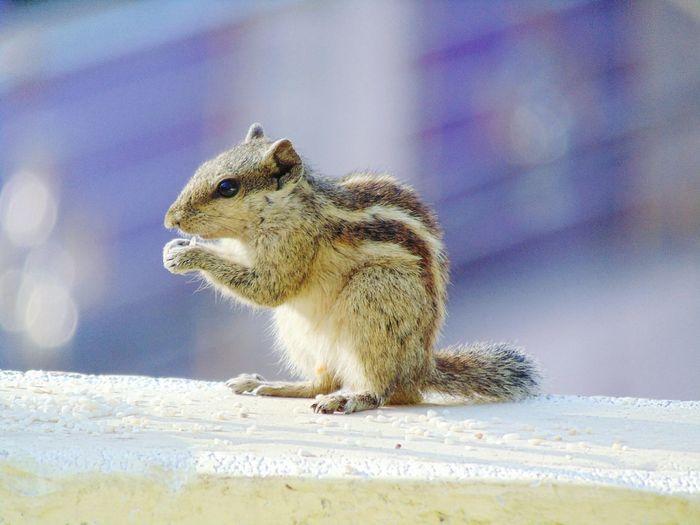 squirrel Squirrel Close-up Sky First Eyeem Photo