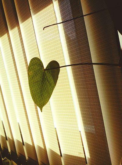 Cor de fulla Cor Heart Heart ❤ Hearts Plant Heart Plants 🌱 Heart Leaves Leaves Leaves_collection Leavesporn