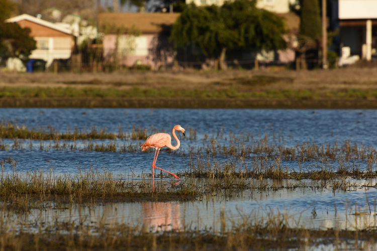 Animal Animal Themes Animal Wildlife Animals In The Wild Bird Flamingo Freshwater Bird Lake Nature One Animal Outdoors Reflection Water