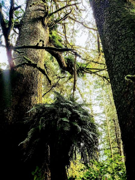 Day Nature Tree Growth Sunlight No People Close-up Outdoors Water Beauty In Nature Sky Perspectives On Nature Forest View Green Color Love To Take Photos ❤ Lights And Shadows Ferns 🌾 Looking Up... Looking Up A Tree Look Up And Take A Picture📸 Tree Looking At Things Forest Adventure Growth Plant