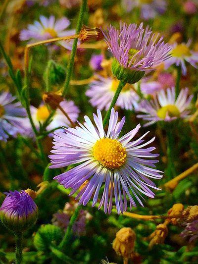 Near or far... http://youtu.be/SqdWTeXWvOg EyeEm Gallery EyeEm Flower Collection 831!!! 831 Onmymind Flowers Stronger Than Ever Neverdoubt Nevergivingup The Rush Of Us
