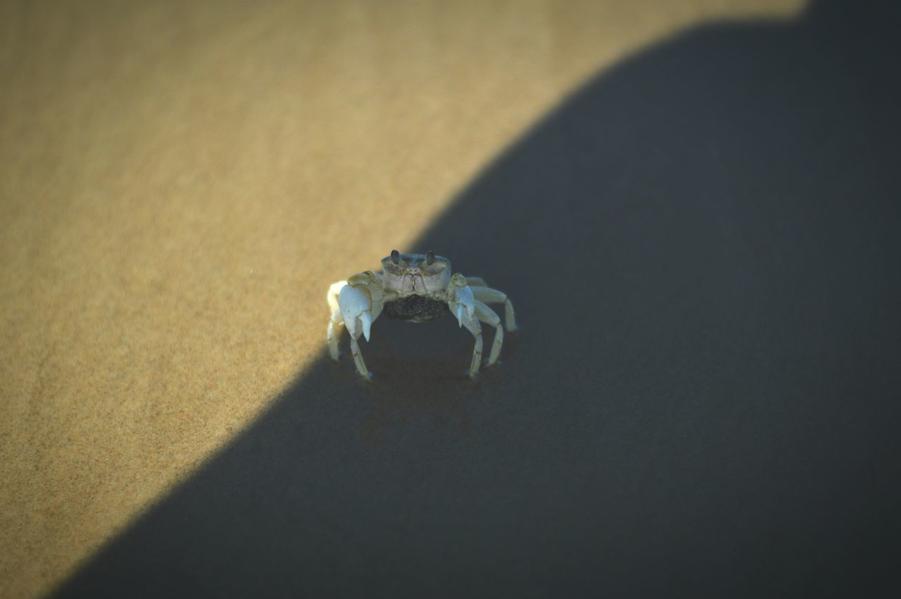 High Angle View Of Crab On Wet Shore