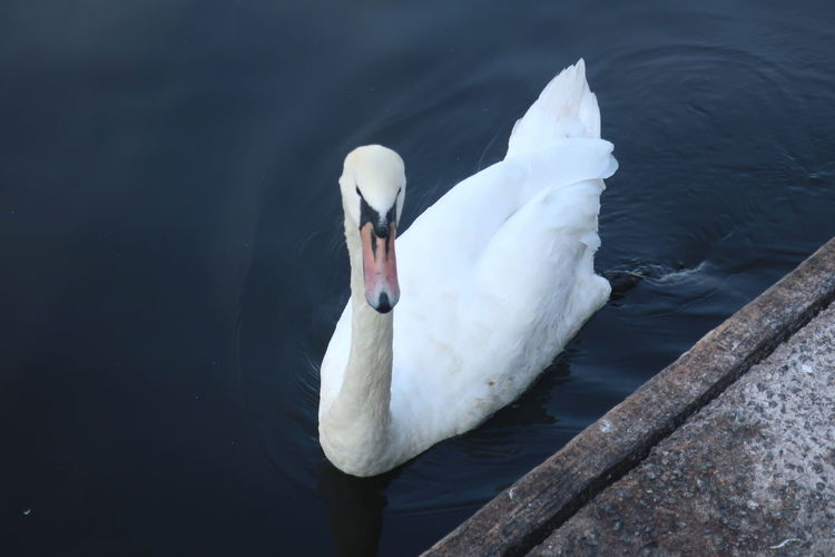 High angle view of swan floating on lake