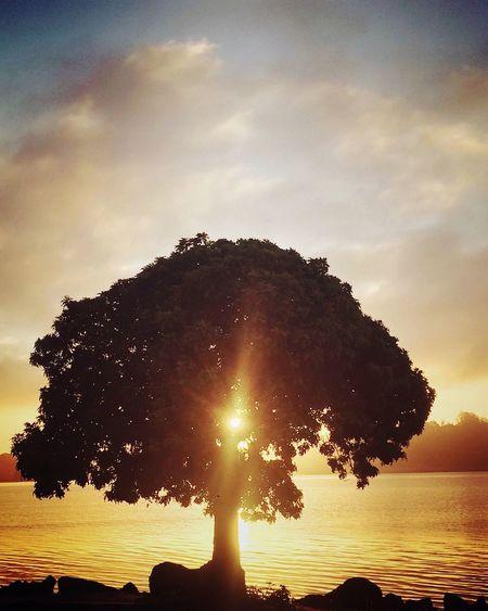 Check This Out Morning Sunrise Inspiring Hopeful Spirituality Sun Seascape Flare San Rafael Bay Area California USA EyeEm Best Shots EyeEm Nature Lover Eye4photography  EyeEm Gallery EyeEm 43 Golden Moments Showcase June The Innovator The Magic Mission