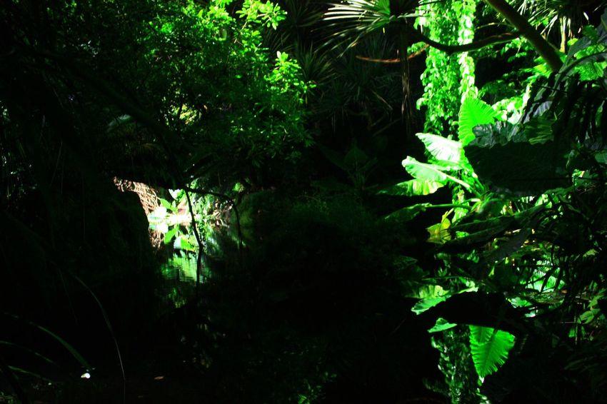 Masoala Hall Regenwald Animals Zoo