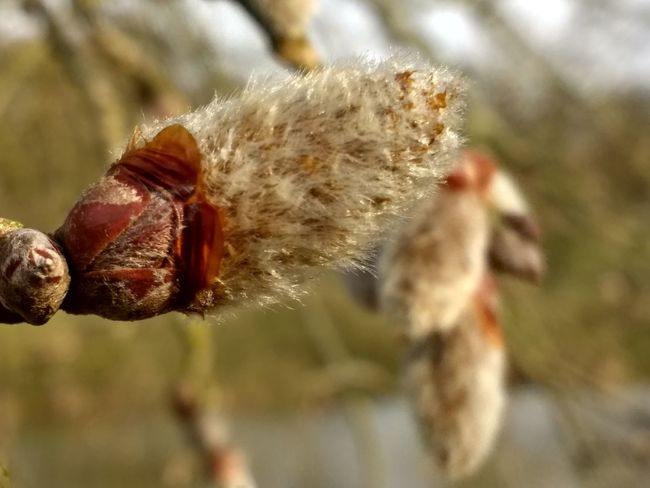 Nature Outdoors Knospen Frühling