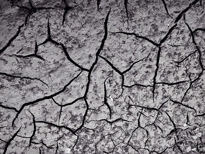 Black & White IPhone Mud Sandgate