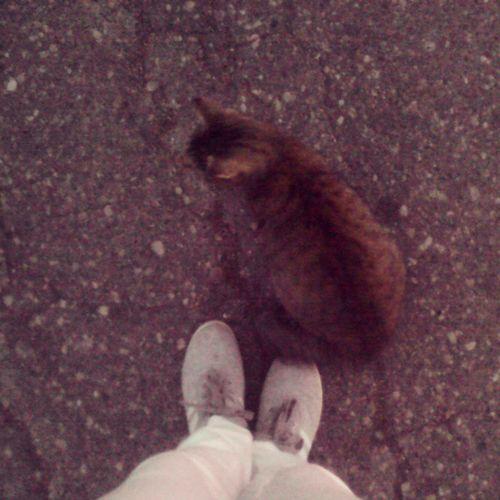 нашла с кем гулять, не моя кошка, а ходит за мной мило нескучно Insta_che