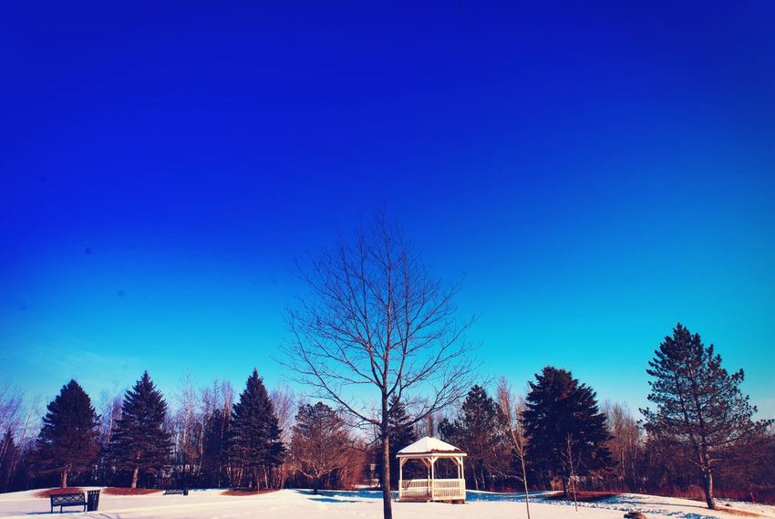 Shades Of Grey Shades Of Winter Blue Tree Clear Sky Winter Nature Tranquility Beauty In Nature Sky Outdoors