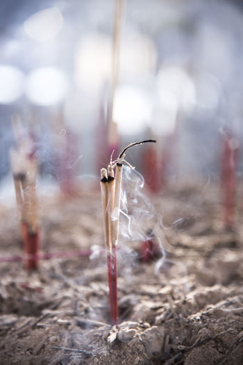 Ash Close-up Day Field Focus On Foreground Nature No People Outdoors Smoke - Physical Structure Stick - Plant Part