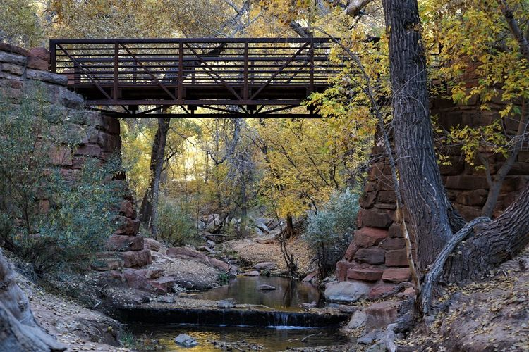View of bridge over stream in forest