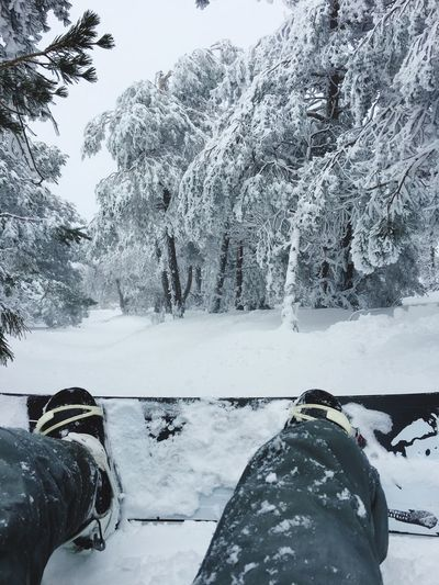 Snow Snowboarding Snow Winter Cold Temperature Tree Plant Beauty In Nature Nature Mountain Lifestyles