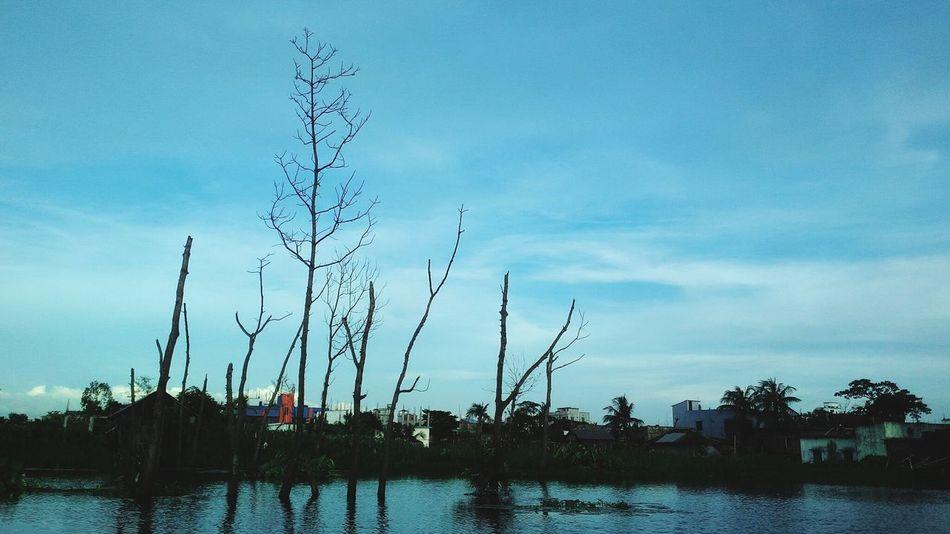 Lonley woods standin tall Bird Tree Water Silhouette Lake Reflection Blue Sky Bare Tree Dead Plant Lone Branch
