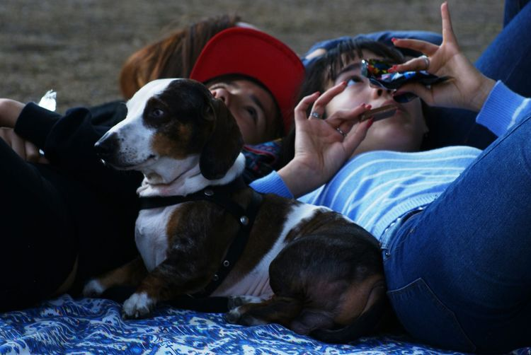 Siblings lying with beagle outdoors