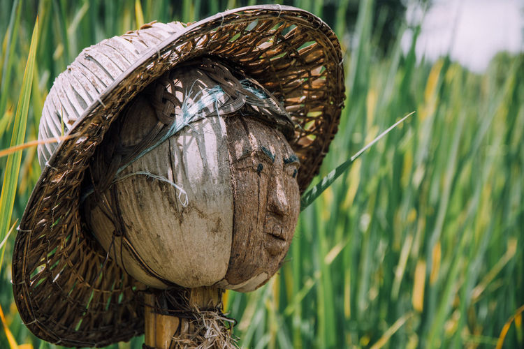 Close-up of dried coconut with anthropomorphic face and hat