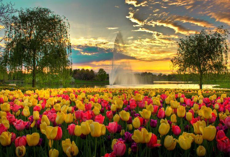 Fountain sky flowers