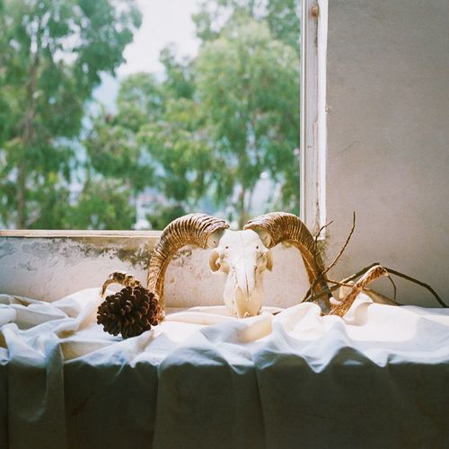 Animal skull on table by window