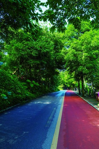Beauty In Nature Day Forest Green Color Growth Landscape Nature No People Outdoors Plant Road Scenics The Way Forward Tranquility Transportation Tree 南宁青秀山
