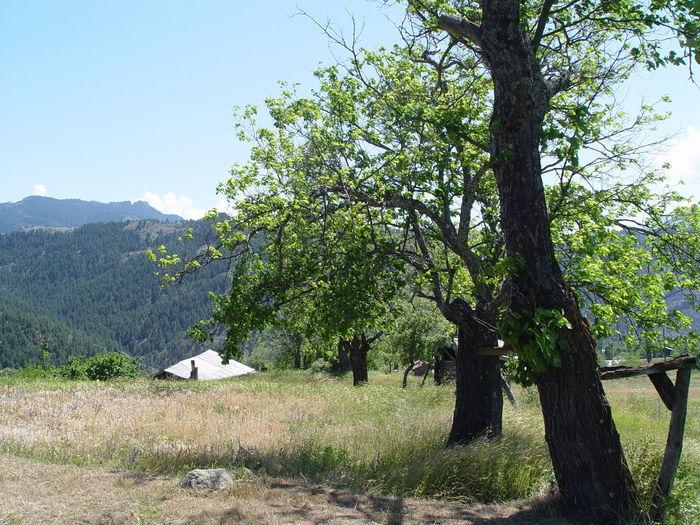 Trees growing in field against clear sky