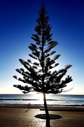 Silhouette tree on beach against clear blue sky