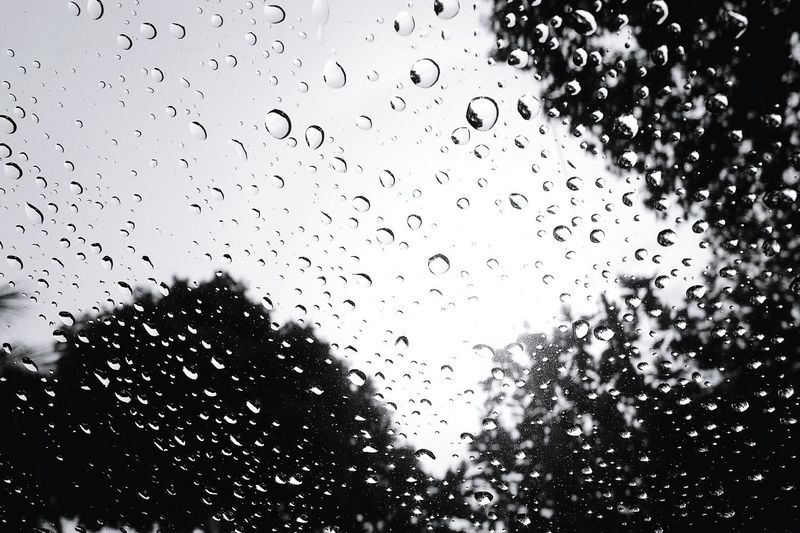 After rain Olympus XZ-1 Droplets Rainy Rain Wet Water Black & White Dots Drop Backgrounds No People Water Silhouette Low Angle View Nature Day Outdoors