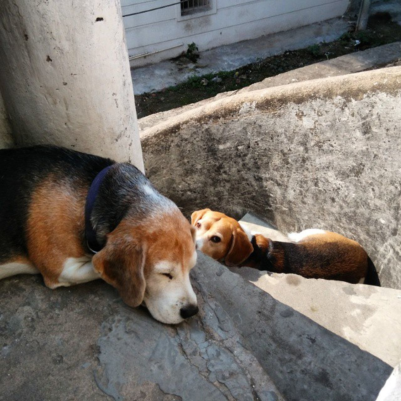 animal themes, mammal, domestic animals, high angle view, day, sleeping, dog, pets, no people, outdoors, relaxation, one animal