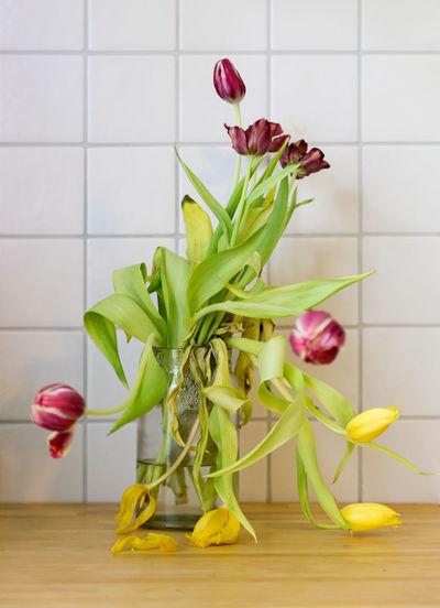 Close-up of yellow tulip in vase