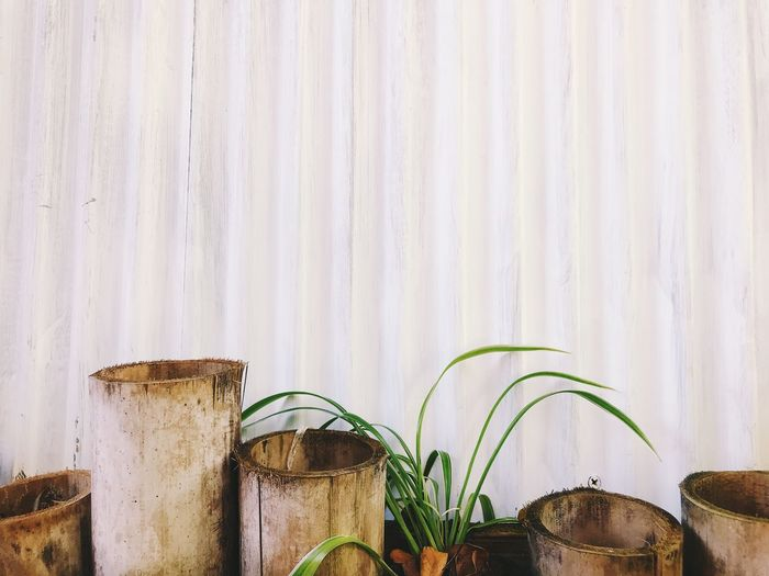 Bamboos against white wall