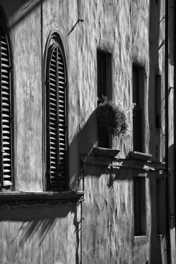 windows Architecture Built Structure Building Exterior Window Day Outdoors No People Casting A Shadow Contrast Travel City Shadows & Light Black And White Shadows Monochrome Security Grill Security Protection Window Grill Window Blind Shutters Florence Italy Florence The Best City In The World Street Photography