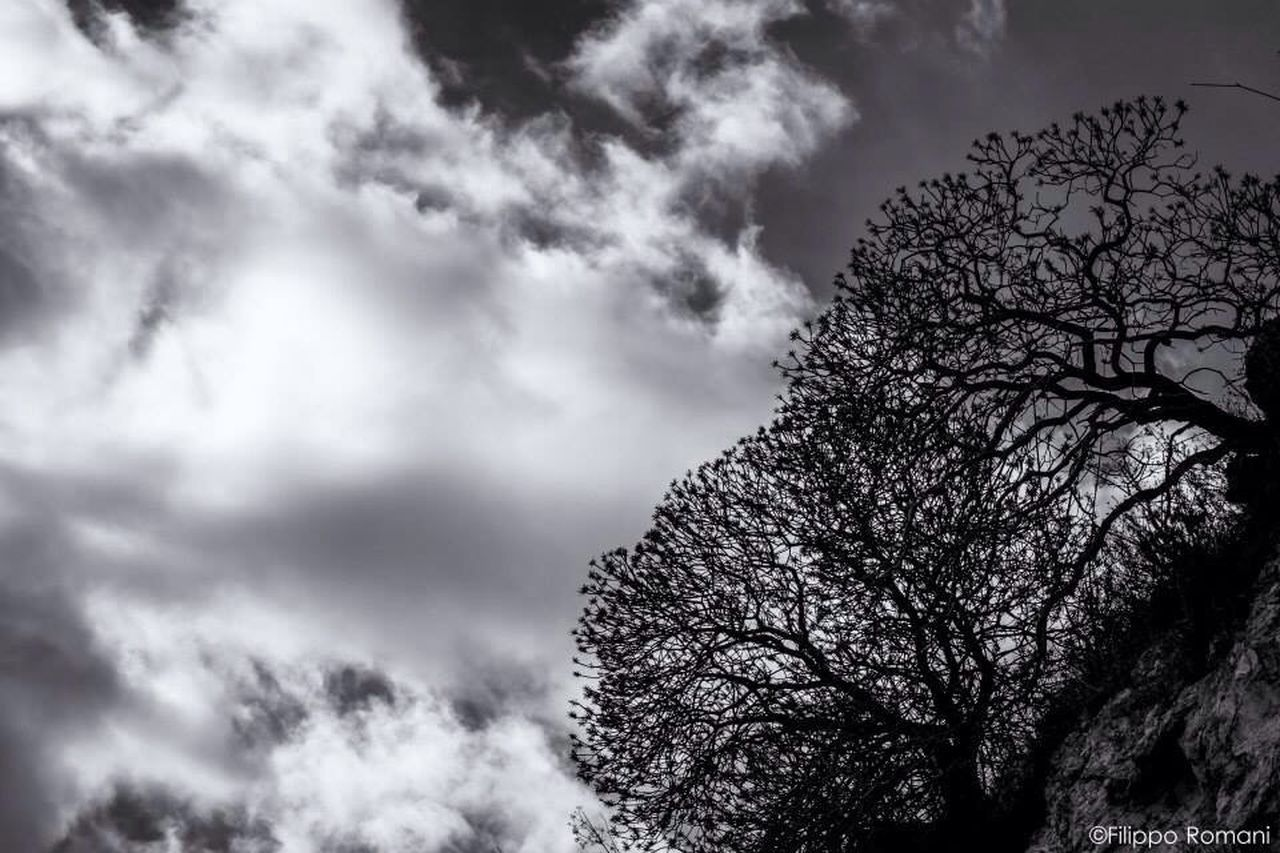 tree, sky, cloud - sky, nature, low angle view, beauty in nature, branch, tranquility, scenics, outdoors, no people, day, growth