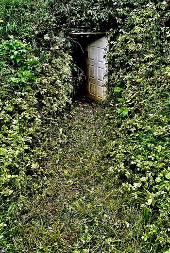 You go first. Check This Out Taking Photos Eye4photography  EyeEm Best Shots Summer Door Nature Kinda Creepy