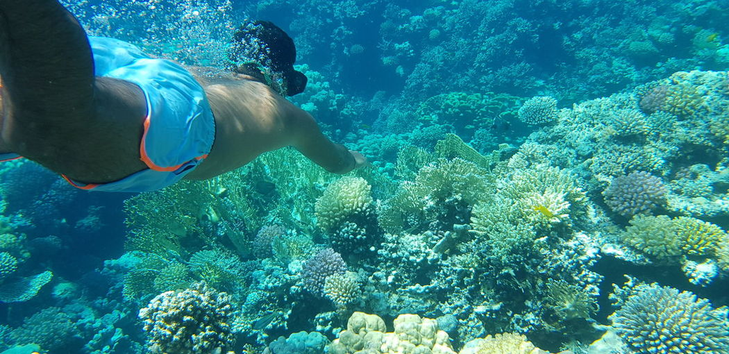 Shirtless Man Swimming Over Coral In Sea