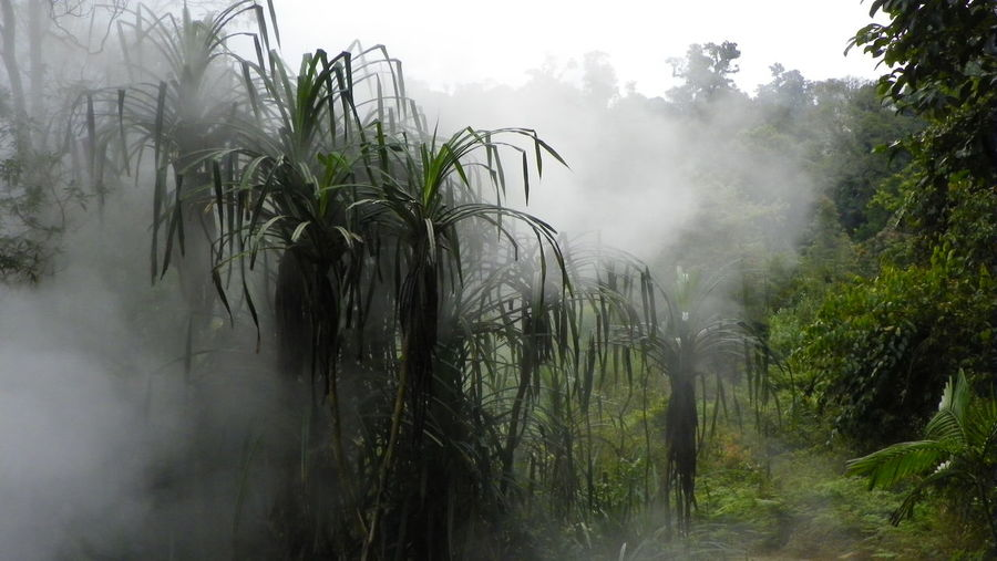 Vapor from natural thermal stream crossing tropical rainforest Beauty In Nature Cloud Day EyeEmNewHere Fog Growth Nature No People Outdoors Plant Smoke Tranquility Tropical Climate Tropical Plants Tropical Rainforest Vapor Vegetation Water Vapor