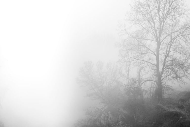 Low angle view of bare trees in foggy weather