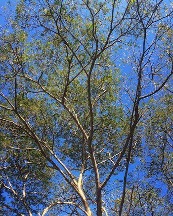 Untitled Blue Sky