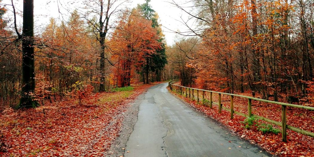 The Way Forward Tree Day Outdoors No People Road Nature Beauty In Nature Sky Marbug Forest Forest Photography Indiansummer Autumn Autumn Colors Fall Hessen Germany