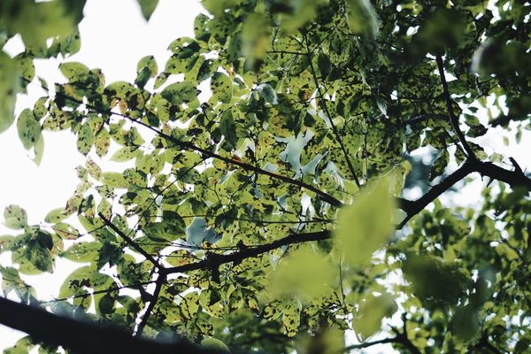 VSCO Vscocam Light And Shadow Streetphotography Snap Plant Tree Growth Low Angle View Branch Leaf Green Color