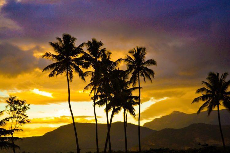 Sunset Sun Enjoying The Sun Hanging Out Enjoying Life Taking Photos Hi! EyeEm Photography EyeEm Nature Lover Nature Cumbum Theni Coconut Trees Good Evening Tamilnadu
