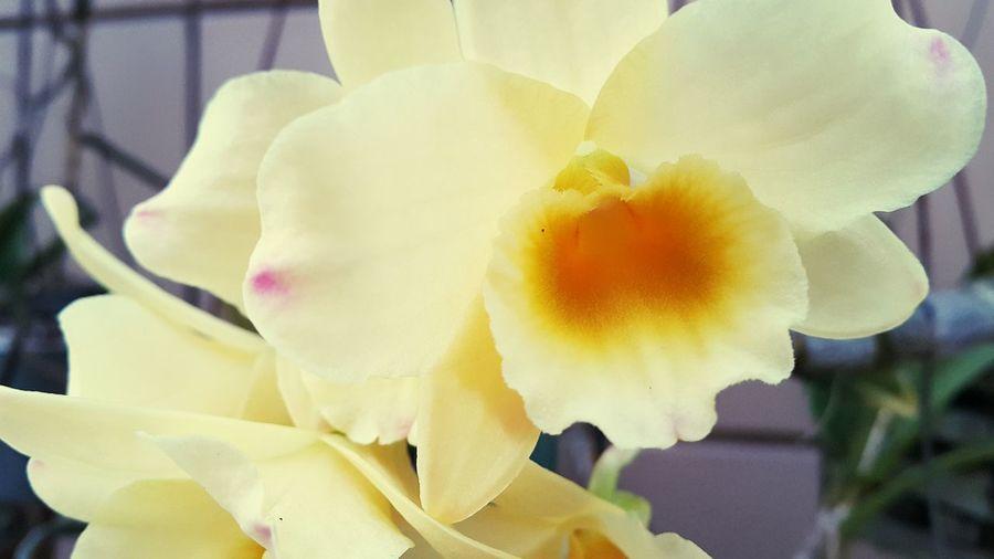 Flores Flower