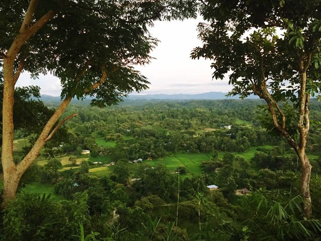 Landscape from chittagong hill track. Tree Nature Green Color Beauty In Nature No People Landscape Outdoors Forest Photography #photo #photos #pic #pics #tagsforlikes #picture #pictures #snapshot #art #beautiful #instagood #picoftheday #photooftheday #color #all_shots #exposure #composition #focus #capture #moment Sujanmap Bangladeshi Phot Documentary Photographer Landscape_photography