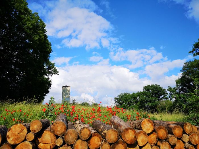 Stack of logs on field by trees against sky