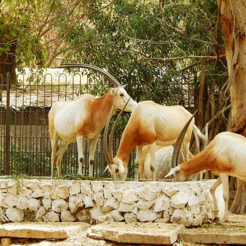 Zoo Animals  Zoophotography ZooLife
