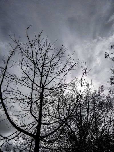 Grey sky... Magick Life Winter Tranquility Sky Flying Nature Silhouette Outdoors No People Beauty In Nature Day Tree EyeEmNewHere Mobility In Mega Cities Colour Your Horizn