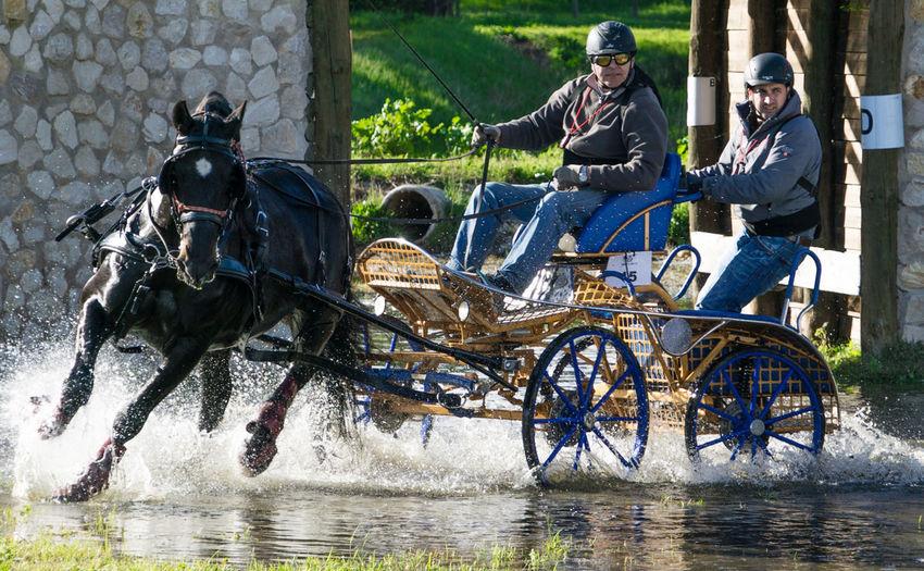 Blackhorse Companhiadaslezirias Coupling Horse Outdoors Race Ribatejoalive S Splashing Transportation